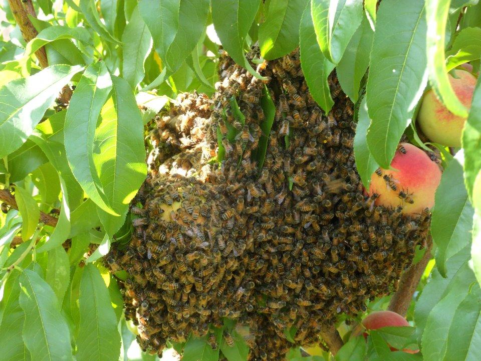 bee exterminator
