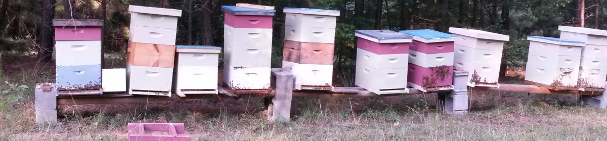 GA Honey Bee Removal Georgia