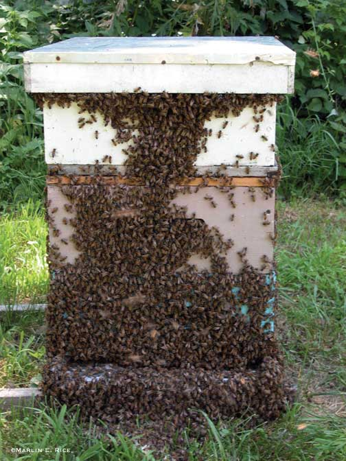 free bee removal