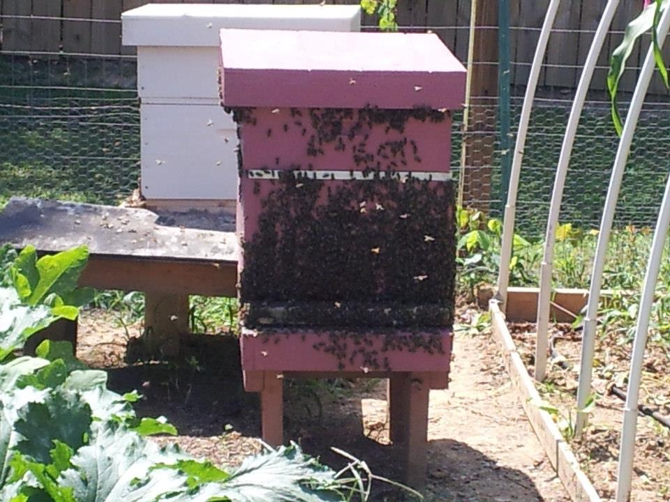 find a beekeeper
