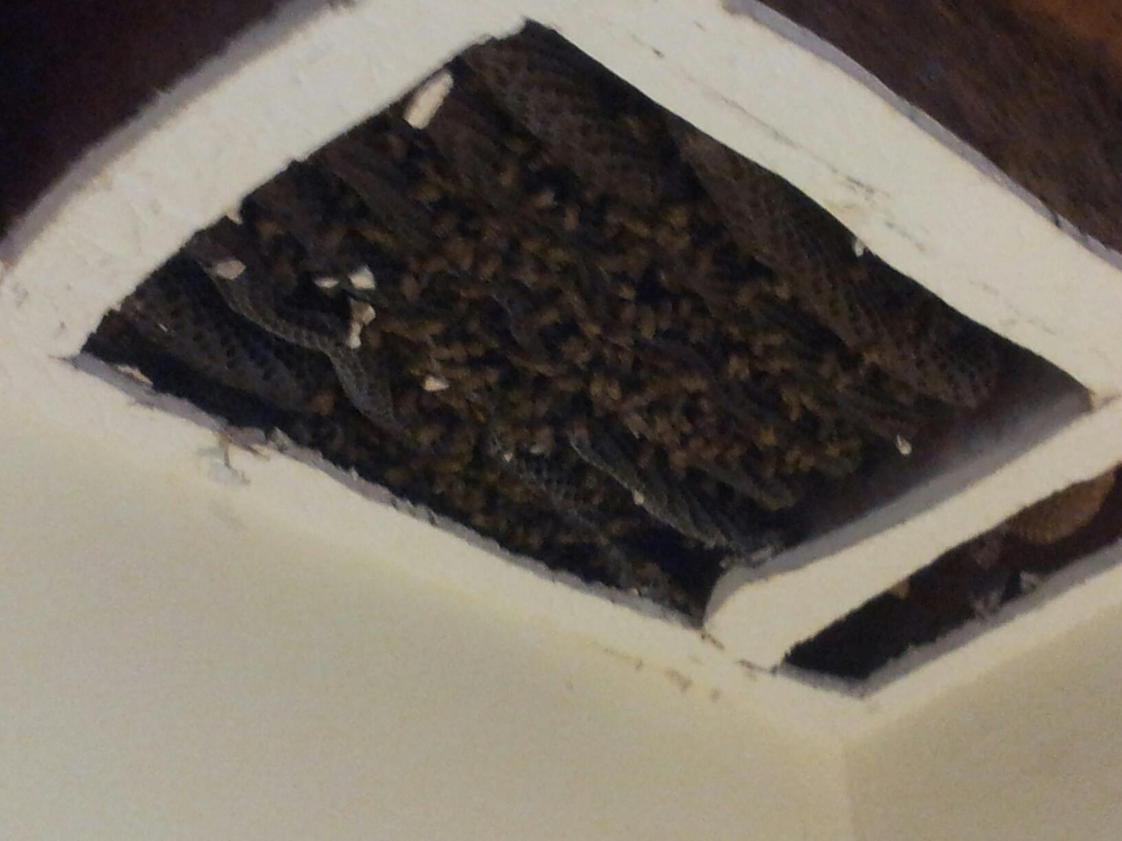 free honey bee removal near me