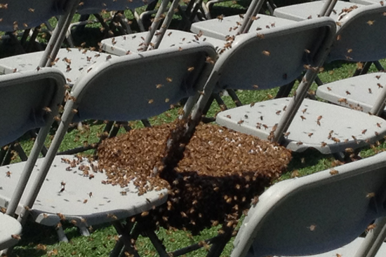 honey bee removal near me