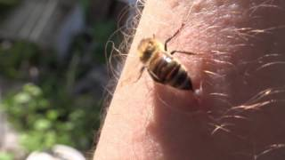 honey bee removal service Roberta GA