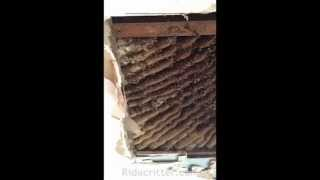 honey bee swarm rescue Cairo GA