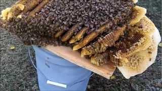 bee removal Attapulgus GA