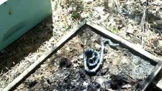 bee removal Blakely GA