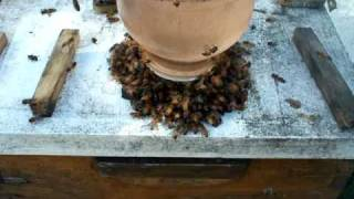 free honey bee removal near me Bronwood GA