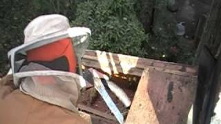 honey bee swarm rescue Cairo GA