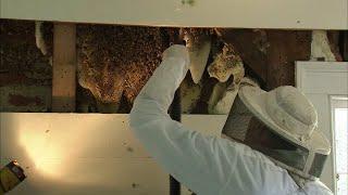 professional bee removal Brinson GA