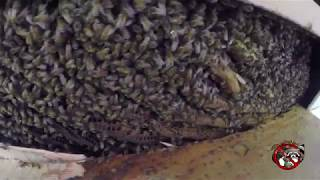 honey bee removal free Bluffton GA