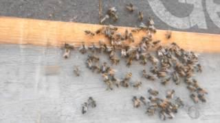 honey bee habitat Leary GA