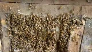 bee removal Dawson GA