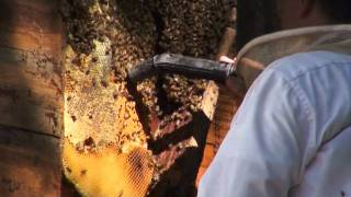 honey bee removal company Colquitt GA