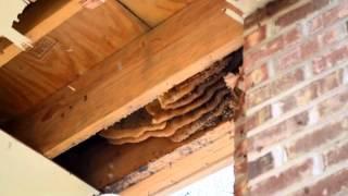 honey bees Fort Gaines GA